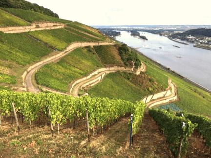Josef Leitz vineyard
