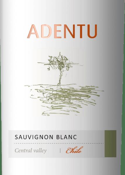 Der Adentu Sauvignon Blanc von Vina Siegel erstrahlt im Glas in einem klaren Hellgelb. In der Nase offenbaren sich animierende Aromen nach frischen Zitrusfrüchten mit Nuancen an Apfelsine, Grapefruit und feinste Nuancen an Kräutern. Der Gaumen lässt sich von dem vitalen Zusammenspiel von Frucht und Säure verwöhnen. Speiseempfehlung für denAdentu Sauvignon Blanc Dieser reinsortige Weißwein aus Chile ist ein toller Speisebegleiter zu Cassoulet, frisches Brot mit Frischkäse-Variationen oder auch zu Gemüse mit Dips.