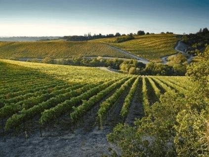 Rancho Zabaco Weingarten