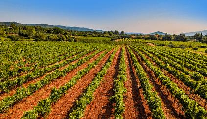 Weinbau im Triangle d'Or