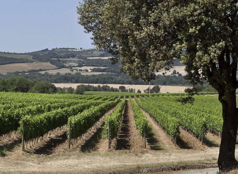 Pian delle Vigne Weinberge