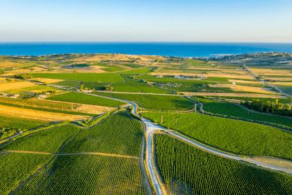 Blick über Weingärten an der sizilianischen Küste