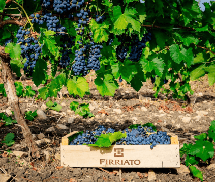 Grapes from Firriato