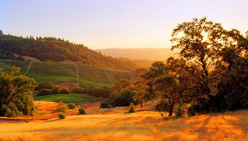 Weinberge in Kalifornien